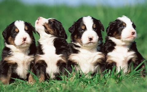 狗狗这十种状态,每一种都在向你呼救!