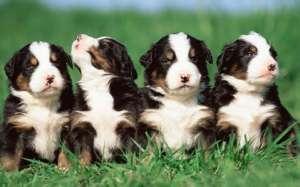 狗狗这十种状态,每一种都在向你呼救
